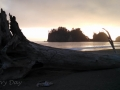 Giant Log on Beach at Quileute Oceanside Resort