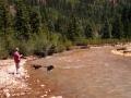 San-Jauns-Jerry-n-Pups-at-River