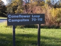 Prairie-Flower-CG-Coneflower-Loop