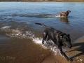 Prairie-Flower-CG-Pups-swimming
