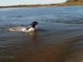 Prairie-Flower-CG-pPups-swimming-2