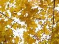 Lutsen-Mtn-Fall-Color-7