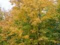 Lutsen-Mtn-Fall-Color-8