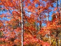 MN-Fall-Color-1