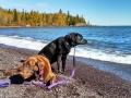 Split-Rock-LH-pups-on-beach