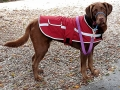 Jasmine modeling her stylish doggy coat...